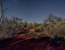 bush-leonora1
