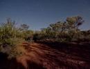 bush-leonora2