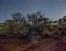 bush-leonora3