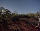 bush-leonora4