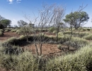 spinifex4